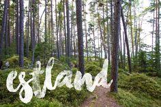 Alles über Estland mit vielen Tipps & Highlights. Das Land der Wälder, Moore, Bären, Inseln und Strände ist eine Reise wert!