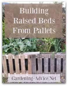 Here is a step by step guide on building raised garden beds from old pallets. We use this way of building raised beds because it is as good as free. It is easy and simple and anyone who can handle a hammer and a saw can build one of these in no time!