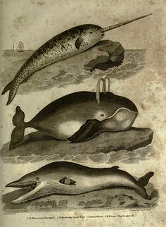 Engravings from Oliver Goldsmith's History of the Earth and Animated Nature (1825) | The Public Domain Review