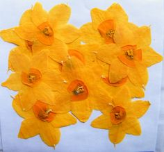 Pressed daffodils- frame with some painted stems and grass and you have adorable NATURAL decor