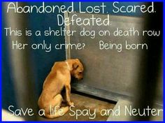 PLEASE SHARE HELP SAVE S LIFE, PLEASE :(