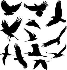 print on colored paper and frame 50 Free High Quality Silhouette Sets 85 Free High Quality Silhouette Sets.print on colored paper and frame Silhouette Images, Bird Silhouette, Bird Stencil, Manualidades Halloween, Bird Drawings, Colored Paper, Ink Color, Bird Art, Beautiful Birds