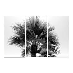 "TITLE: Soul Deep LOCATION: Venice Beach, California MEDIUM: 3 Panel Canvas Art 24""x36"" Triptych TAGS: Palm Tree, Black and White Art"
