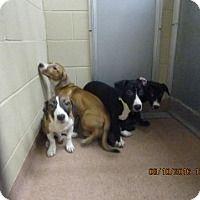 STILL AVAILABLE 9/10/16 ~ URGENT - Alvin Animal Adoption Center in Alvin, TX…