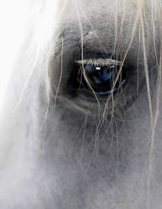 2017/09/03 Horse