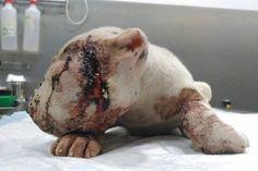 Une femme entend des pleurs en provenance d'une boîte, et découvre alors un petit animal battu à mort