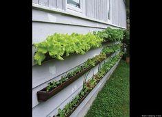 Create a Gutter Garden