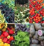 List of Organic/Heirloom seed companies.
