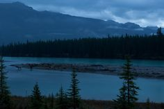 Sunrise on the Athabasca River.  Many elk on island, two in river.