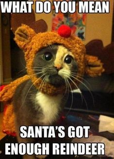 17 of The Best Animal Christmas Memes to Get You Into The Christmas Spirit!