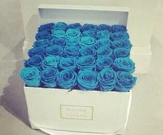 #blueroses #white #p
