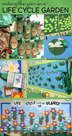 Life Cycle Garden hallway display- See how we delighted our students by turning our hallway into a life cycle garden! We displayed our class charts and writing about the frog, butterfly, and plant life cycles. We even turned our students into butterfly kids! This post has 3 FREE life cycle printables for 1st, 2nd, or 3rd grade including a Butterfly Kids narrative writing craft!.