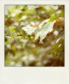 rain + leaves