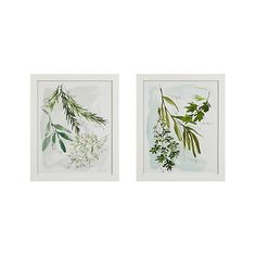 Culinary Herbs Prints Set of 2 | Crate and Barrel