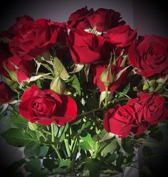 Roses and love