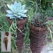 hanging succulents - Google Search