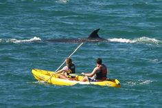 Kayaking alongside a whale in Hermanus