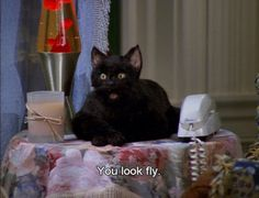 If we had to pick a favorite feline familiar, it would hands down be Salem the Cat from Sabrina the Teenage Witch. Cat Memes, Funny Memes, Hilarious, Cat Quotes, Movie Quotes, My Spirit Animal, My Animal, Sabrina Cat, Salem Cat