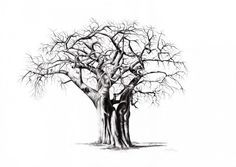 A single Baobab tree - large and intricate