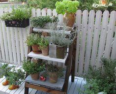 ogródek na balkonie - Szukaj w Google