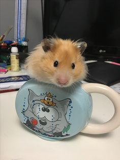 Cute Long Hair Syrian Hamster - Nibbles' Favourite Hangout spot - Hamster toy