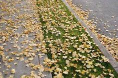 otoño....