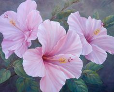 Marianne Broome — Pink Hibiscus (720x580)