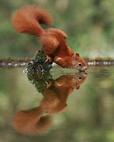 Squirrel The Effective Pictures We Offer You About Cute animals wallpaper iphone A quality picture can tell you many … Wildlife Nature, Nature Animals, Animals And Pets, Amazing Animals, Animals Beautiful, Cute Baby Animals, Funny Animals, Wild Animals Photography, Photography Photos