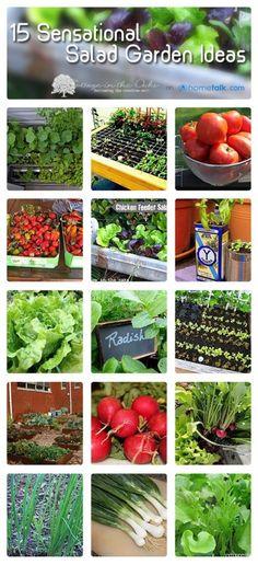 Salad Garden Ideas           Boas idéias para fazer um jardim ou horta com vegetais para boas saladas.