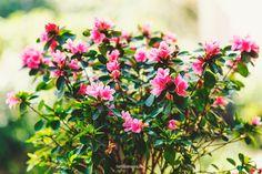 Azalea Child, Nature, Flowers, Plants, Photography, Image, Boys, Naturaleza, Photograph