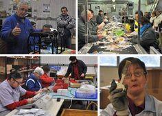 24/11/13. Morlaix (29). L'Esat, une entreprise particulière | Ouest France Entreprises. http://www.entreprises.ouest-france.fr/article/morlaix-29-lesat-entreprise-particuliere-24-11-2013-119011