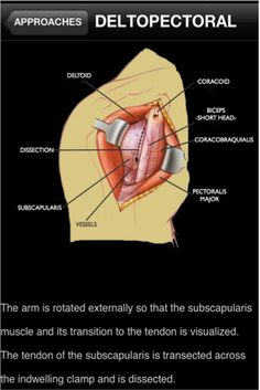 iShoulder is a comprehensive education module that explains almost everything one would need to know about the shoulder.