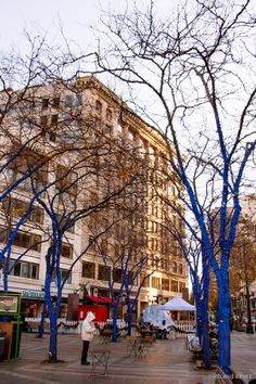 blue trees with lights | downtown seattle