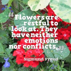 Quotes about the beauty of flowers  #quote #quotes