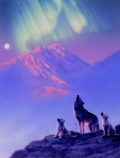 Wolves and the Northern Lights. Northern lights or Aurora Borealis is a natural light display in the night skies in the high attitude regions of the Arctic.Eskimos believed it was the dance of animal spirits. Beautiful Sky, Beautiful Pictures, Hirsch Illustration, Northen Lights, Wolf Spirit, Ciel, Night Skies, Beautiful Creatures, Nature Photography