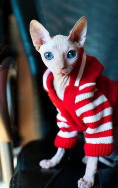 Cold cat in striped sweater.