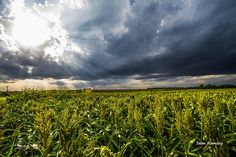 Kansas Photography, Rural Photo, Evening Sun, Maize Art, Farm Photography, Wall Art Kansas, Sky Print, Photography Art, Americana Print, Art