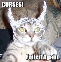 Bwahahaha!  Poor kitty!