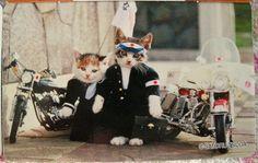 なめ猫 ~情報求む。。。 - お試しブログ ~Yahoo!編~ - Yahoo!ブログ