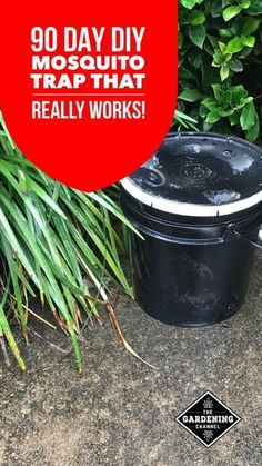This DIY mosquito trap really works. Uses two different insecticides that effectively reduces mosquito populations. Easy to build, with a materials list and instructions. Try it at Gardening Channel. - Home And Garden