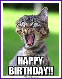 Birthday Meme with a Cat: Happy Birthday!