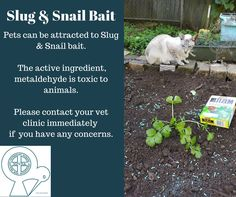 Slug bait is toxic and potentially fatal to pets if treatment is not sought immediately after ingestion