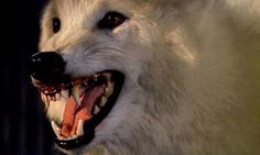 Heroes and Monsters: Wolfen Eurasian Wolf, Excellent Movies, Red Dog, Dog Teeth, White Wolf, Werewolf, Dog Days, Mammals, Creepy
