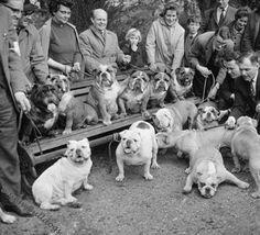 ♥ Baggy Bulldogs ♥ Bulldog Classic ♥ Bulldog Meetup ± 1966