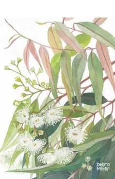 Watercolor Artwork, Watercolor Flowers, Watercolour, Australian Wildflowers, Australian Native Flowers, Botanical Drawings, Botanical Art, Australian Painting, My Art Studio