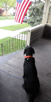 """Chapter 40 - The Book of Barkley - """"View from a Porch""""."""