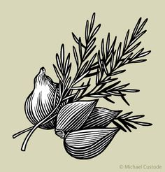 rosemary illustration - Google Search