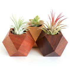 GEOMETRIC PLANTERS by tomoni (northerns.co/products)