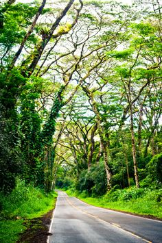 Kalapana Road, Big Island. It's an absolutely beautiful drive.