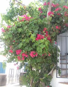 have you every been in Andalusia? if not, check out our latest post about hidden little gems of Andalusia - fall in love with Mojacar or Mijas Andalusia, Outdoor Structures, Fall, Plants, Autumn, Flora, Plant, Planting
